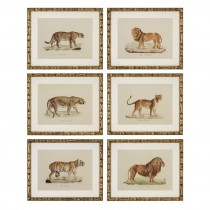 Eichholtz Lion Tiger Jaguar Set of 6 Prints